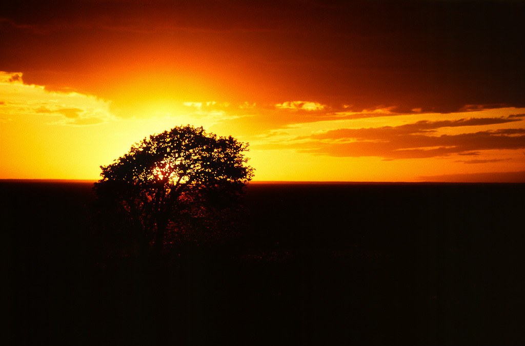 Sunset behind a lone tree.