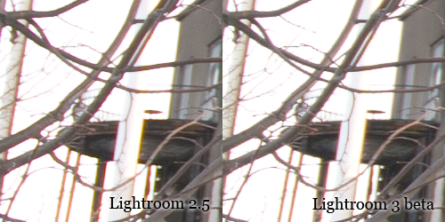 Comparison of purple fringing in Lightroom 2 and 3 beta.